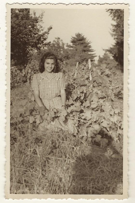 lady vineyard