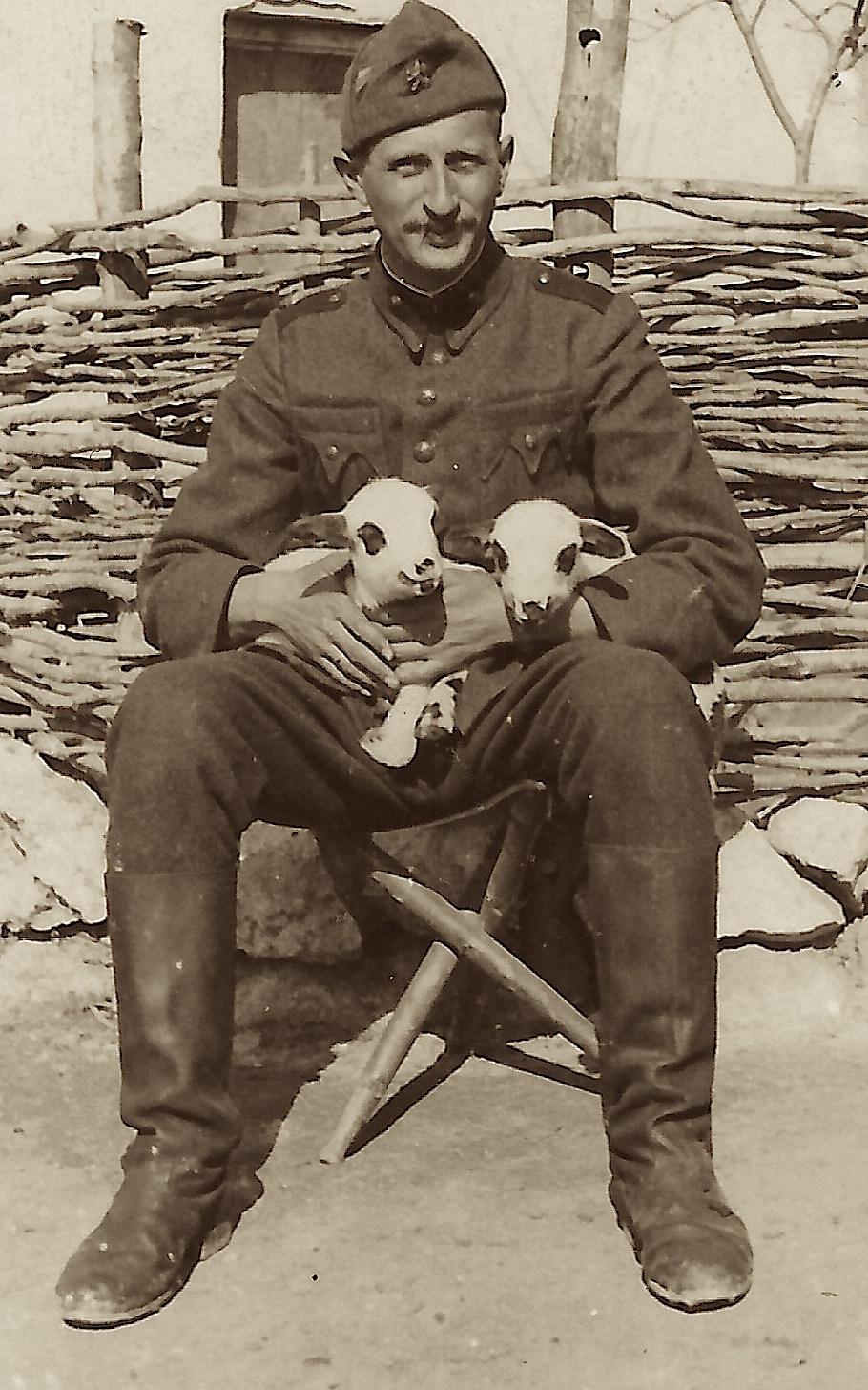 lamb soldier 2