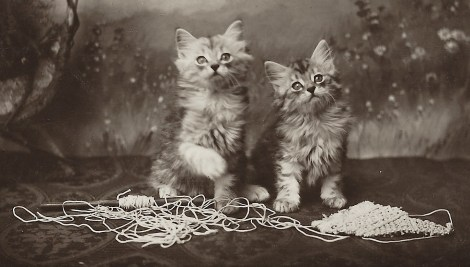 kitten knitting 1
