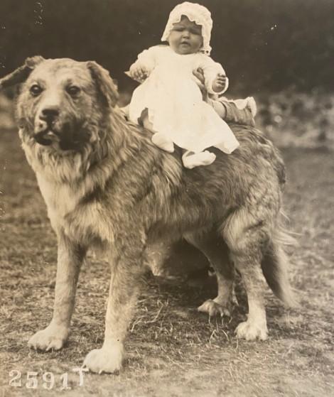 baby dog 3