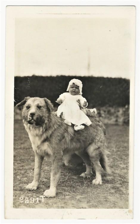 2020-04-12_001701 dog baby 1