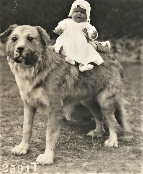 2020-04-12_001842 dog baby 2
