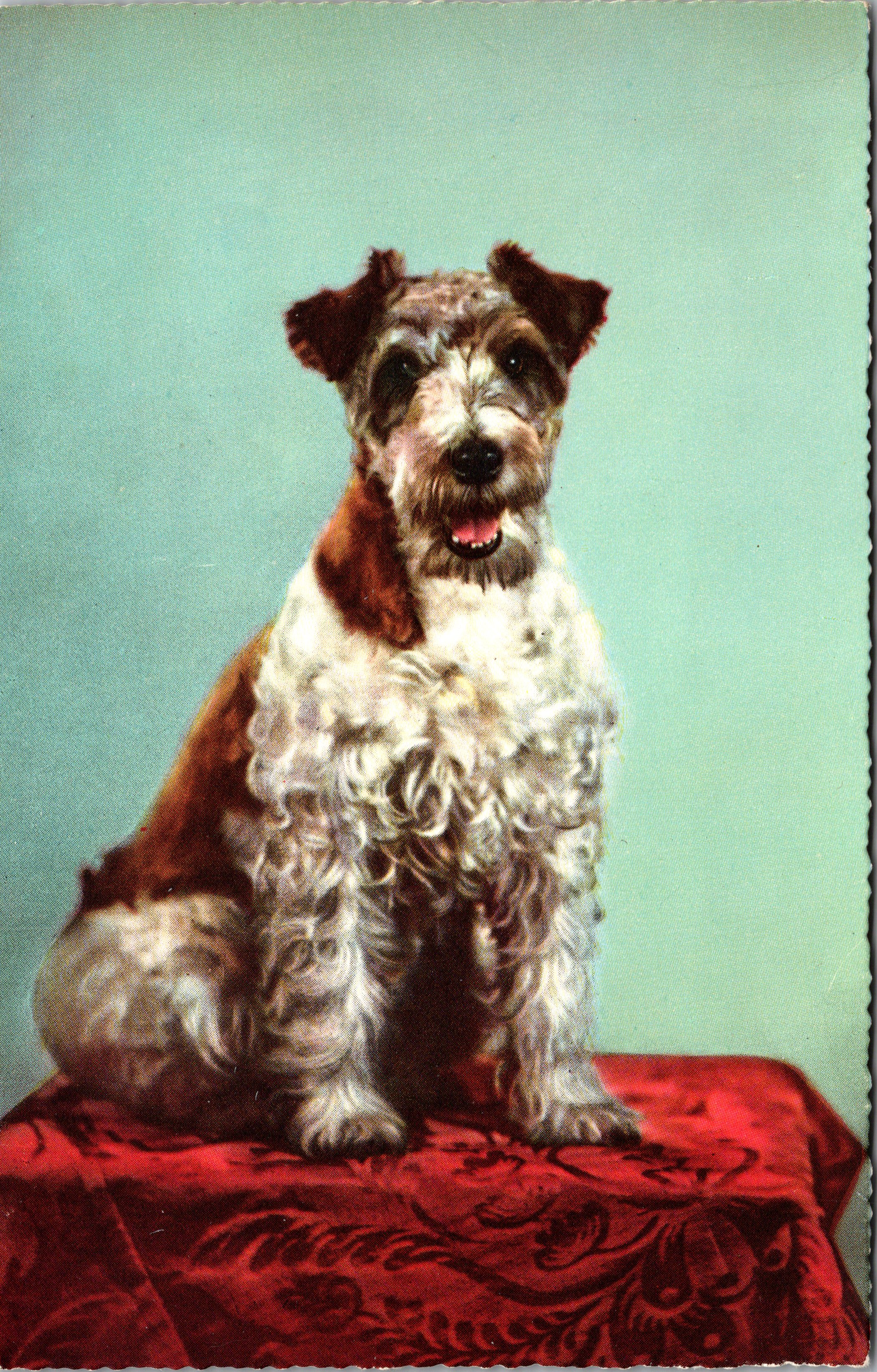 wired-haired-terrier_0001-1