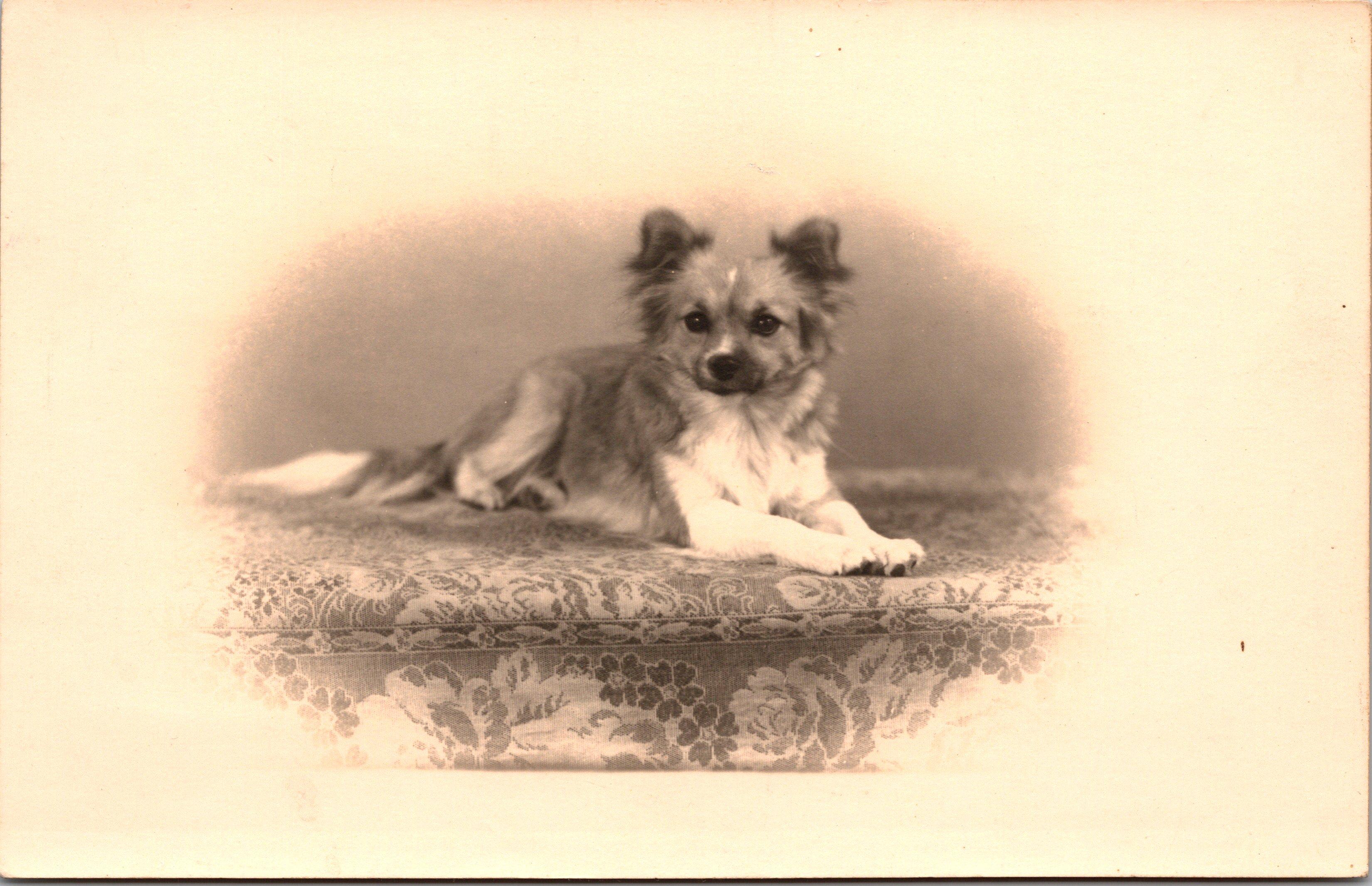 cute-dog_0001-1